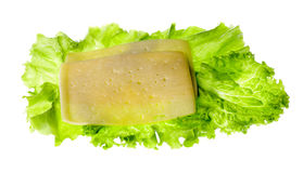 Patty, cheese, lettuce plant, isolated on white background Stock Images
