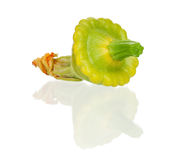 Patty pan squash. Green patty pan squash isolated on white background Royalty Free Stock Photos