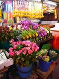 Pattya-Straßenblume Stockfoto