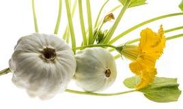 Pattypan, άσπρη κολοκύνθη, pepo Cucurbita Στοκ Φωτογραφία