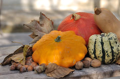 Pattypan with other squash Royalty Free Stock Photos