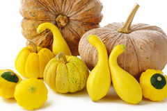 Pattypan,pumpkin and squash on white Royalty Free Stock Photos