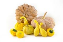 Pattypan,pumpkin and squash Royalty Free Stock Photography