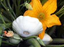 Pattypan squash Stock Photo