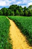 Patway через зеленое пшеничное поле Стоковые Изображения RF