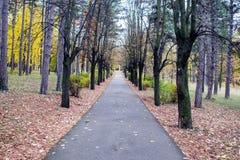 Patway entre el bosque viejo en bosque profundo Imagen de archivo
