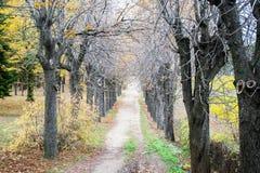 Patway entre el bosque viejo en bosque profundo Imagenes de archivo