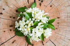 Pau-cetim branco de Andaman no fundo de madeira Imagens de Stock Royalty Free