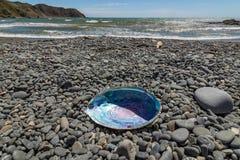 Paua/Abalone på NZ-stranden Arkivbild