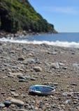 Paua Abalone shell washed up on the Kapiti Island Beach. Stock Photography