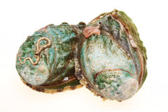 Paua shell Stock Images