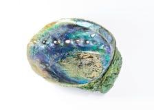 Paua shell Stock Photos