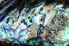 Paua shell background Stock Photo