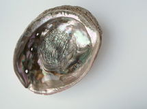 Paua shell interior Stock Images