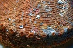 Paua shell outside surface macro Stock Photography