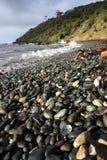 Paua shell on the rocky New Zealand coastline. Paua shell naturally washed up on a rocky New Zealand coastline Royalty Free Stock Photo