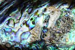 Paua Shellhintergrund Stockfoto