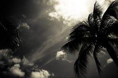 paume Photos libres de droits