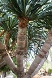 Paume-arbres Photo libre de droits