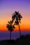 Paume au coucher du soleil Photos libres de droits