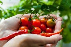 Paume complètement des tomates-cerises et des poivrons de piment en gros plan Image libre de droits