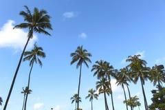 Paume d'arbre de plage d'Hawaï Honolulu images libres de droits