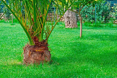 Paume dans l'herbe image stock