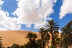 Paume dans le désert Photographie stock libre de droits