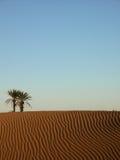 Paume dans le désert Photos stock