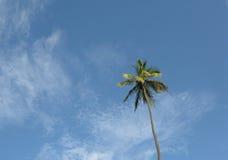 Paume dans les tropiques Image libre de droits