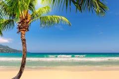 Paume de Cocos sur la mer de plage sablonneuse et de turquoise sur l'île de Paradise Jamaïque photos stock