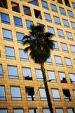 Paume de corporation Photo stock