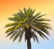Paume de coucher du soleil photos libres de droits