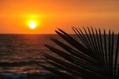 Paume de coucher du soleil Image libre de droits