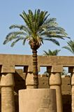 Paume de l'Egypte dans le temple de Karnak Photos stock