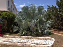 Paume de nature d'Anguilla photographie stock
