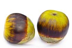 Paume de Palmyra asiatique, paume de grog, palmier à sucre. Images stock