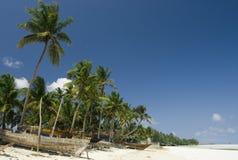 paume de plage Image stock