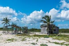 Paume de plage au del Carmen Mexico Yucatan de Playa photo libre de droits