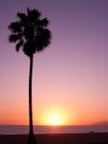 Paume de plage de coucher du soleil Images stock