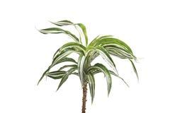 Paume de plantes d'intérieur Photo libre de droits