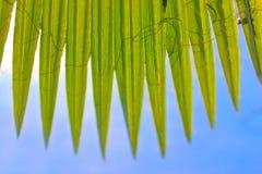 Paume de ventilateur Images libres de droits