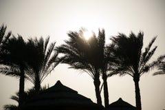 Paume en Egypte, coucher du soleil Photo stock