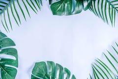 Paume et fond tropicaux de feuilles de monstera images libres de droits