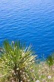 Paume et la mer Image stock