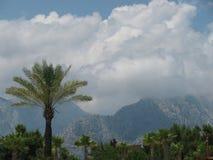 Paume et montagnes photographie stock libre de droits