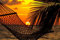 Paume, hamac et coucher du soleil Images stock
