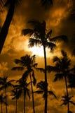 Paume noire sur la plage de nuit Photographie stock libre de droits