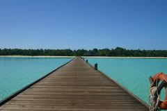 Paume Palme d'île de Maledives Photos stock