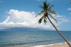 Paume près de la côte d'océan Image libre de droits